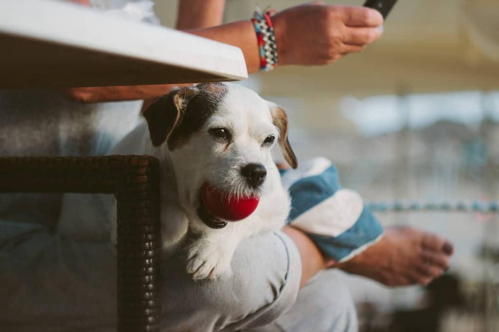 make some extra cash in a bind pet sitting