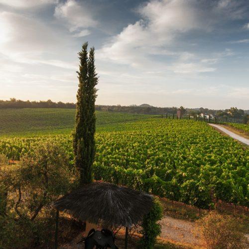swoosh finance for wine farm cash