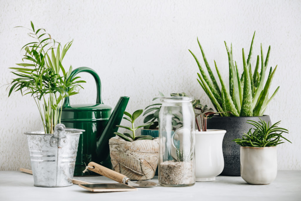 Home decorating ideas on a budget: decorate with plants