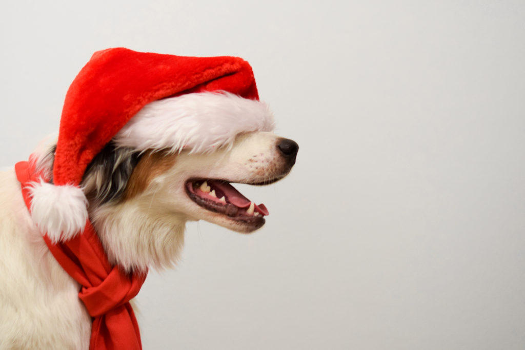Gift Box for dogs | Swoosh Finance